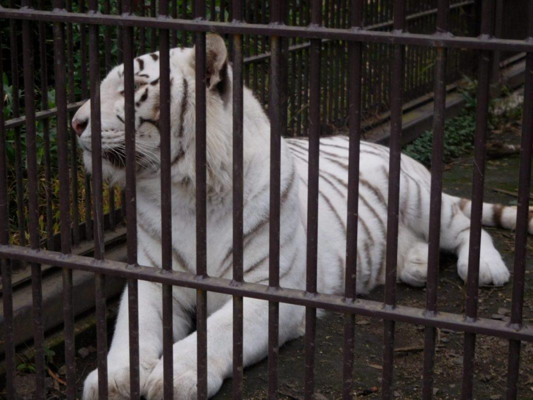 宇都宮動物園でマジックショー